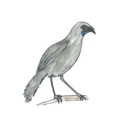 Team logo - Kōkako